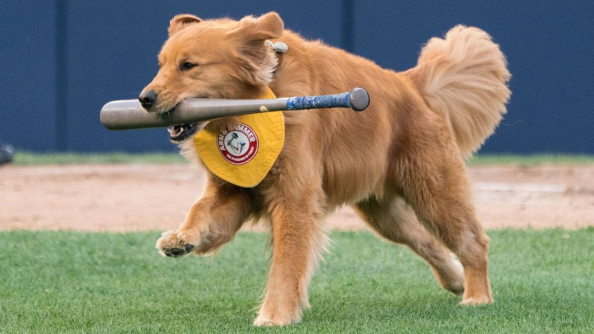 13 Sports to Bet During the Dog Days of Summer article feature image