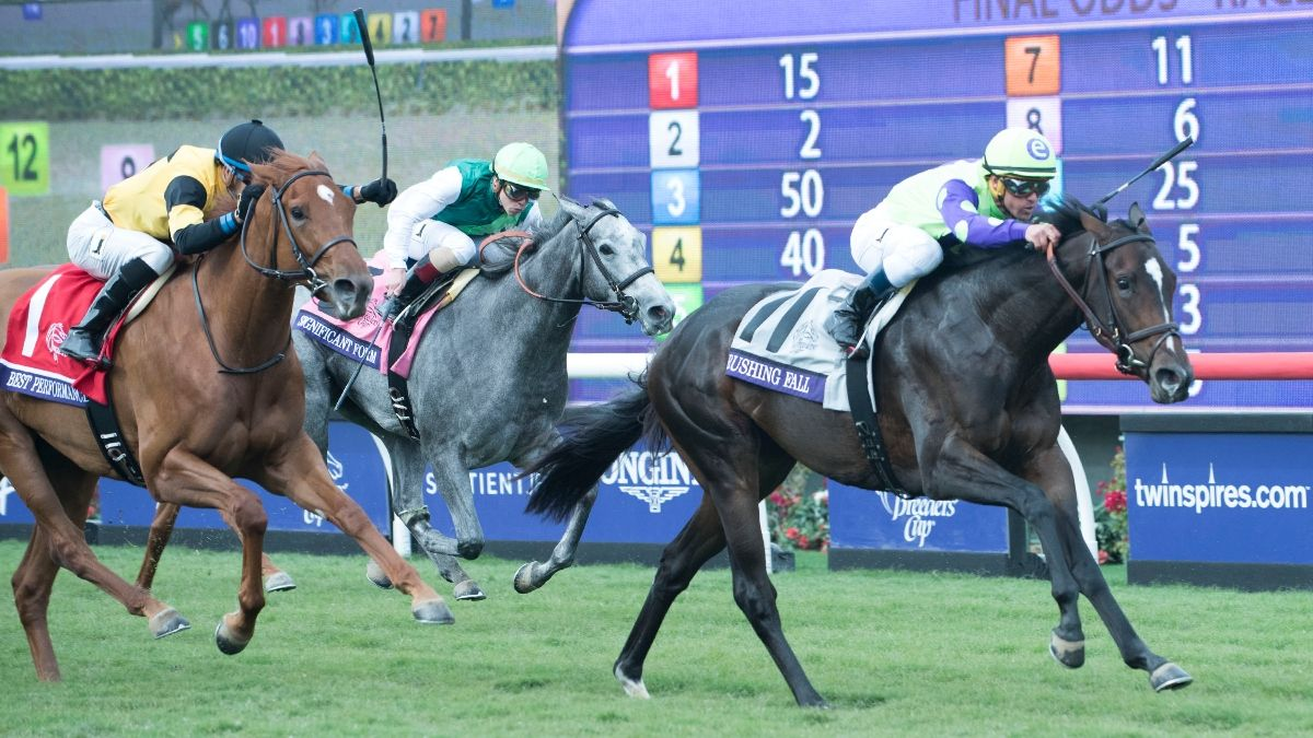 Best horse races to bet on something decimal odds betting in craps
