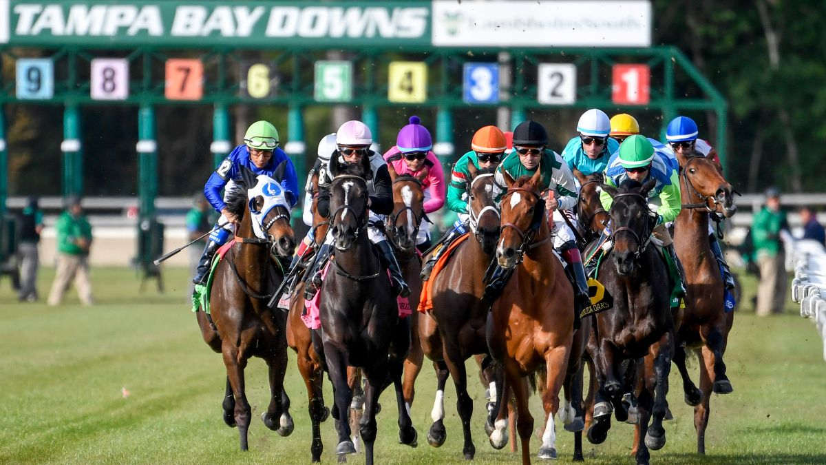 Horse Racing Picks for Wednesday, April 15: Best Value Bets for Tampa Bay Downs article feature image